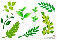 1493729281_leaves