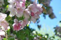 flowers_2483912_960_720.bamau_